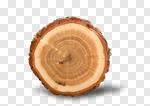 Сlipart Tree Ring Log Wood Tree Trunk Tree photo cut out BillionPhotos
