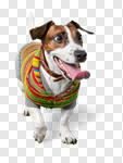 Сlipart ill illness aid pet animal photo cut out BillionPhotos