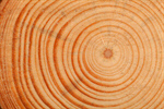 Сlipart Tree Ring Tree Nature Circle Wood photo  BillionPhotos