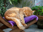 Сlipart Domestic Cat Pets Isolated Orange Tabby photo  BillionPhotos
