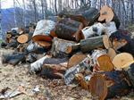 Сlipart Lumber Industry Deforestation Log Wood Tree photo  BillionPhotos
