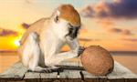 Сlipart Monkey Primate Isolated Macaque Animal   BillionPhotos