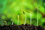 Сlipart Growth Seed Plant Seedling Bud photo  BillionPhotos