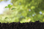 Сlipart earth day tree grow green spring   BillionPhotos