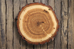 Сlipart Wood Log Tree Trunk Tree Portion   BillionPhotos