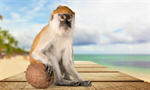 Сlipart Monkey Banana Primate Isolated Eating   BillionPhotos