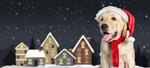 Сlipart pet dog animal white holiday   BillionPhotos