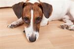 Сlipart ill illness aid pet animal photo  BillionPhotos