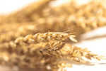 Сlipart wheat farm cereal flour grain photo  BillionPhotos