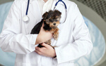 Сlipart Vet Dog Veterinary Medicine Pets Puppy   BillionPhotos