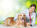 Сlipart veterinarian vet dog pet doctor   BillionPhotos