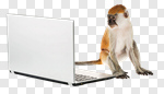 Сlipart Monkey Computer Laptop Animal Typing photo cut out BillionPhotos