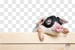 Сlipart animals pig piglet head isolated photo cut out BillionPhotos