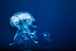 Сlipart Smoke Abstract Shape Gray Swirl photo  BillionPhotos
