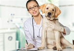 Сlipart veterinarian vet pet dog animal   BillionPhotos