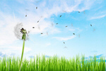 Сlipart Dandelion Air Environment Clean Nature   BillionPhotos