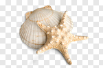 Сlipart Sand Dollar Starfish Sand Dollar Shell photo cut out BillionPhotos