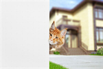 Сlipart dog cat sign isolated around   BillionPhotos