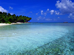 Сlipart Beach Tropical Climate Australia Palm Tree Island photo  BillionPhotos