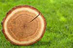 Сlipart Wood Log Tree Trunk Tree Portion   BillionPhotos