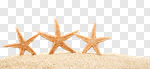 Сlipart beach starfish 2014 coco tourism photo cut out BillionPhotos