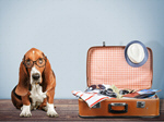 Сlipart Dog travel suitcase journey Glasses   BillionPhotos