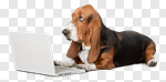 Сlipart Dog Computer Humor Animal Laptop photo cut out BillionPhotos