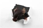 Сlipart Rat Animal Mouse Hole House Hole photo  BillionPhotos