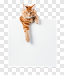 Сlipart cat reaching sign ginger pet photo cut out BillionPhotos