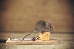 Сlipart Mouse trap Risk Mouse Humor Danger   BillionPhotos