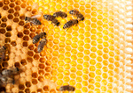 Сlipart Bee Honey Bee Beehive Honey Community photo  BillionPhotos
