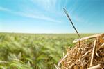 Сlipart Needle in a Haystack Searching Haystack Needle Hay   BillionPhotos