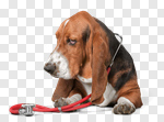 Сlipart Dog Pets Healthy Lifestyle Boxer Stethoscope photo cut out BillionPhotos