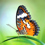 Сlipart Butterfly Monarch Butterfly Photography Insect Flower photo  BillionPhotos