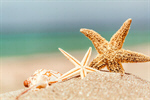 Сlipart beach starfish 2014 coco tourism photo  BillionPhotos