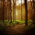 Сlipart Autumn Forest Tree Nature Landscape photo free BillionPhotos