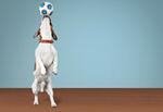 Сlipart dog cute pets white black   BillionPhotos