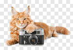 Сlipart cat photography photo table baby photo cut out BillionPhotos