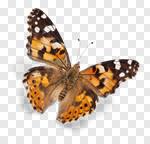 Сlipart Butterfly Spring Freedom Isolated Insect photo cut out BillionPhotos