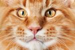 Сlipart cat fun fur animal paw photo  BillionPhotos