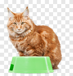 Сlipart cat food bowl dog pet photo cut out BillionPhotos