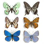 Сlipart Butterfly Insect Wing Isolated Blue   BillionPhotos