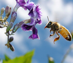 Сlipart Bee Flower Honey Honey Bee Flying photo  BillionPhotos