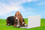 Сlipart Dog Computer Pets Shopping Animal   BillionPhotos
