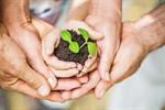 Сlipart earth day plant tree hands photo  BillionPhotos