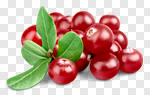 Сlipart Cranberry Vitamin Pill Leaf Healthy Eating Isolated photo cut out BillionPhotos