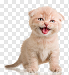 Сlipart Domestic Cat Kitten Humor Cute Isolated photo cut out BillionPhotos