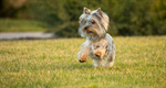 Сlipart Dog Puppy Running Cheerful Small photo  BillionPhotos