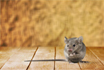 Сlipart mouse Risk Mousetrap Humor Danger   BillionPhotos