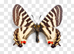 Сlipart Butterfly Insect Wing Isolated Blue photo cut out BillionPhotos